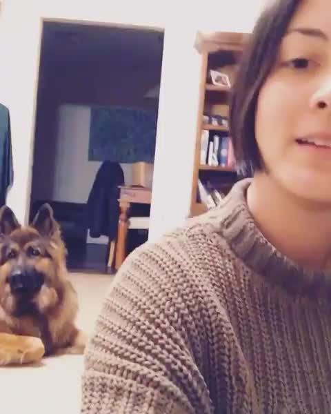 Watch and share Animalovers GIFs and Dogtraining GIFs by vani  on Gfycat