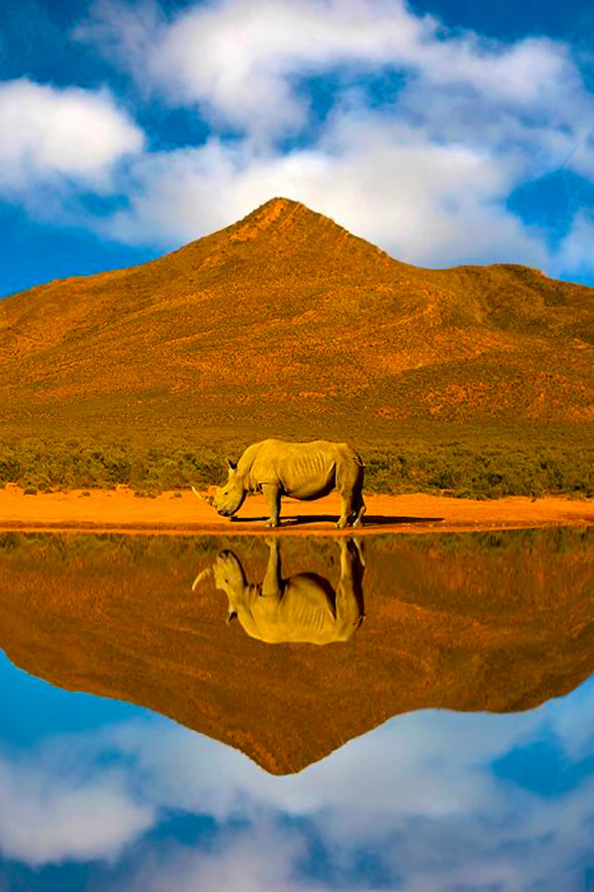 africa, clouds, mountain, nature, reflection, rhino, rhinoceros, water, Africa's Treasure GIFs