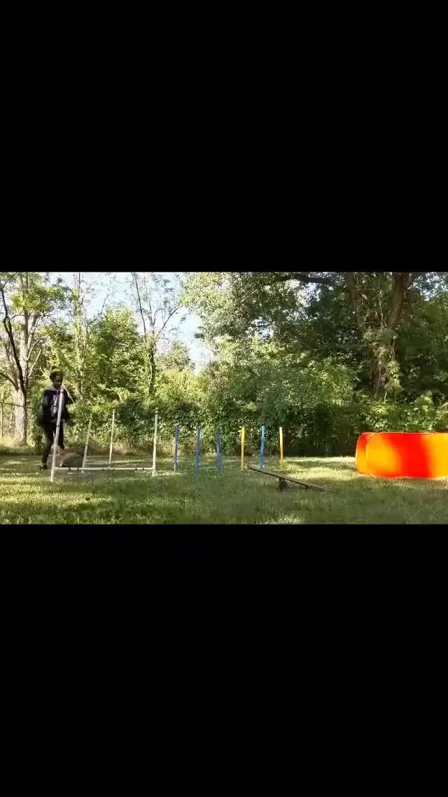 Watch and share Agility Course GIFs by lnfinity on Gfycat