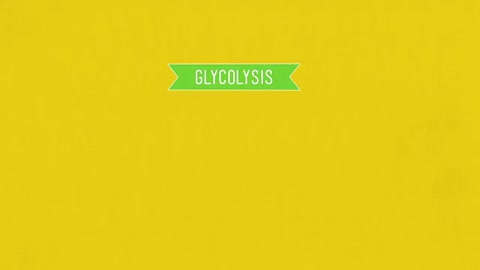 Watch and share Photosynthesis And Repsiration GIFs on Gfycat