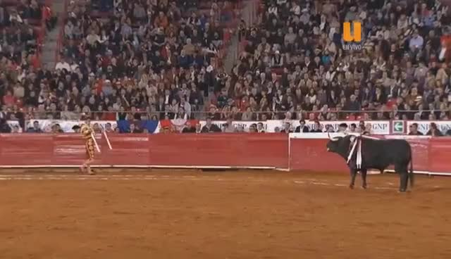Watch and share 8a OCTAVA CORRIDA DE TOROS, TEMPORADA GRANDE PLAZA MEXICO, MORANTE, MANZANARES, RIVERA GIFs on Gfycat