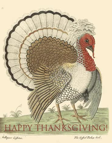 Watch and share Happy Thanksgiving Turkey Wishes Animated Gif GIFs on Gfycat