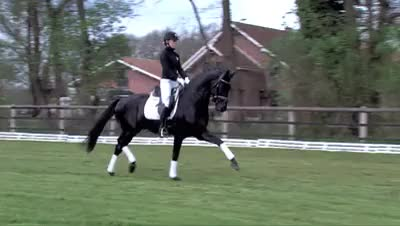 Watch and share Fürstenball GIFs and Equestrian GIFs on Gfycat