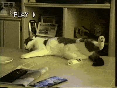 Cat, Funny, Lol, Sleepy, TheRatBox, Sleepy GIFs