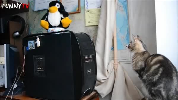 animalsbeingderps, catsvstechnology, Take that! and that too! (reddit) GIFs