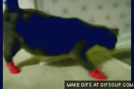 Watch Boots GIF on Gfycat. Discover more related GIFs on Gfycat