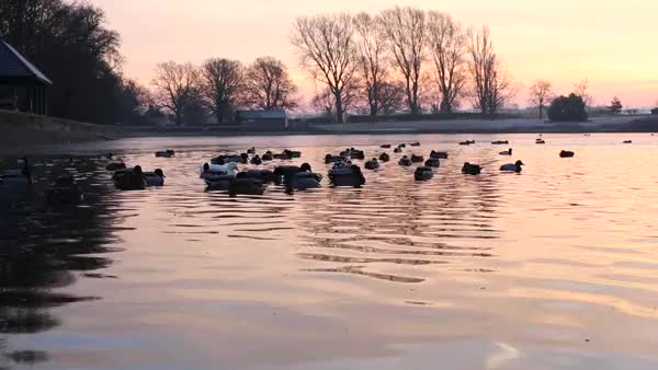 Watch Swindon Ducks GIF on Gfycat. Discover more EarthPornGifs, earthporngifs GIFs on Gfycat