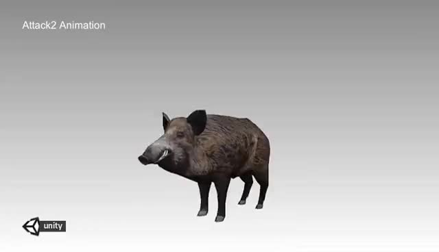 Watch and share Wildboar Animations Demo GIFs on Gfycat