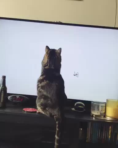 Watch You almost got him buddy GIF by Kimberly Ross (@saltysatans) on Gfycat. Discover more Cat, aww, cats, funny GIFs on Gfycat