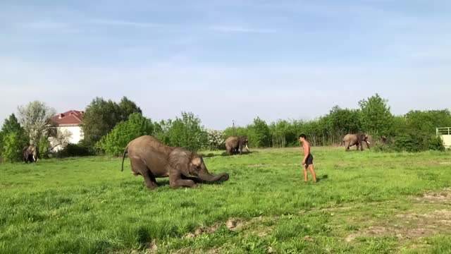 Watch Man Somersaults on Elephant's Back GIF on Gfycat. Discover more elephant, flip, news, somersault, storyful, viral GIFs on Gfycat