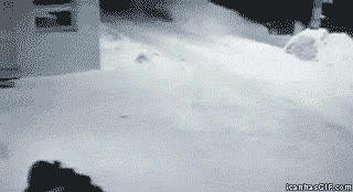 snowing pets GIFs