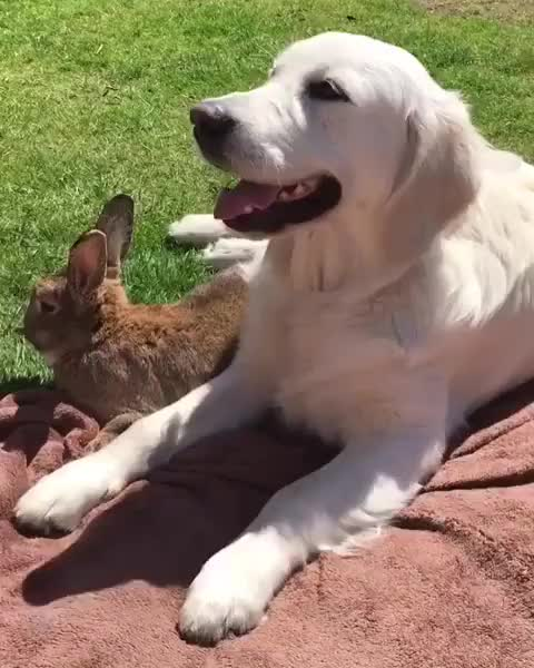 Watch and share Best Friend GIFs and Rabbit GIFs on Gfycat
