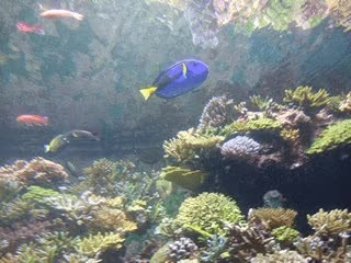 Watch and share I Found Dory At The Sea Aquariun! GIFs on Gfycat