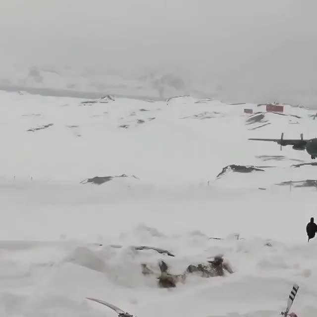 A C-130M hits a snow drift while landing at the Teniente Rodolfo Marsh airport in Northern Antarctica GIFs