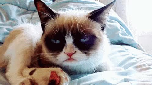 Watch this cat GIF by leahstark on Gfycat. Discover more cat, grumpy cat GIFs on Gfycat