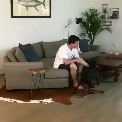 Good Boy of the year candidate GIFs