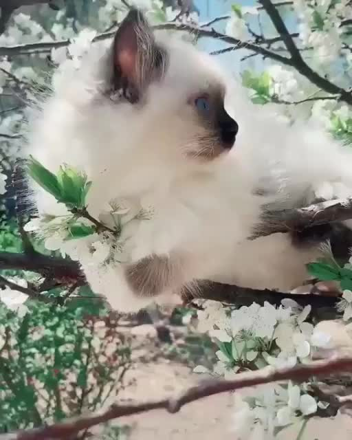Watch and share Kitten GIFs and Tree GIFs by teistom on Gfycat