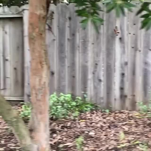 Watch and share Pig Zoomies GIFs and Fast Pig GIFs by lnfinity on Gfycat