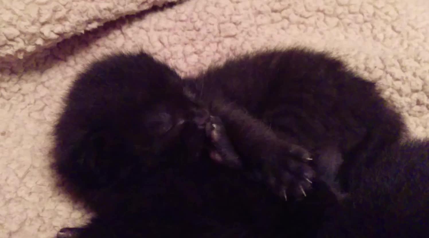 Cute, Kitten, Sleepy Kitten GIFs