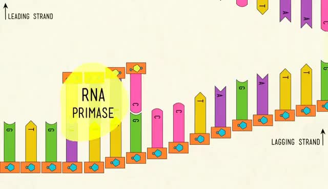 Watch and share DNA Structure And Replication: Crash Course Biology #10 GIFs on Gfycat