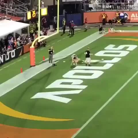 Watch and share Dog Breaks World Record By Catching 83 Yard Frisbee Toss GIFs by t-h-a-t-o-n-e-8-6 on Gfycat