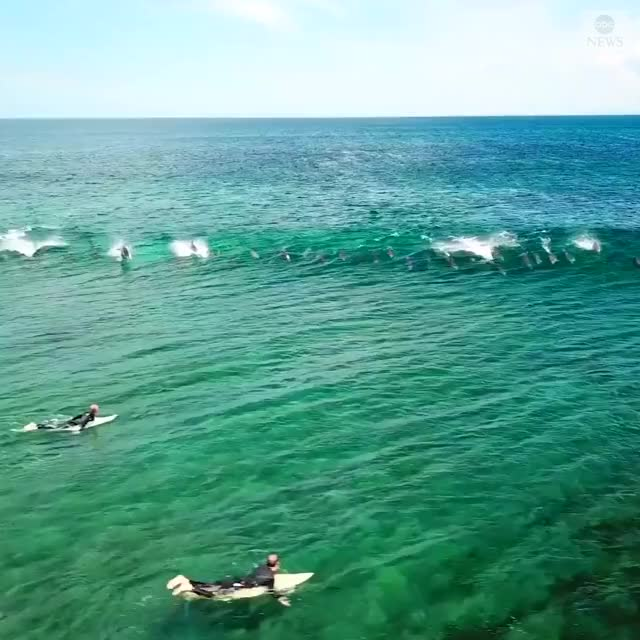 Watch and share Dolphins GIFs and Dolphin GIFs by Jackson3OH3 on Gfycat