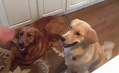 Watch and share Doggy GIFs on Gfycat