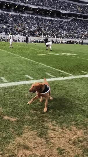Watch and share The Best Wide Retriever GIFs on Gfycat