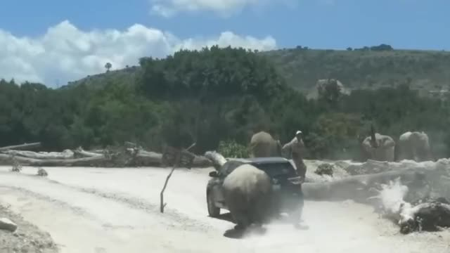 Watch Rhino Attacks and Tries to Overturn Family SUV in Mexican Safari Park GIF on Gfycat. Discover more Entertainment, Storyful Rights Management, news, storyful, viral GIFs on Gfycat