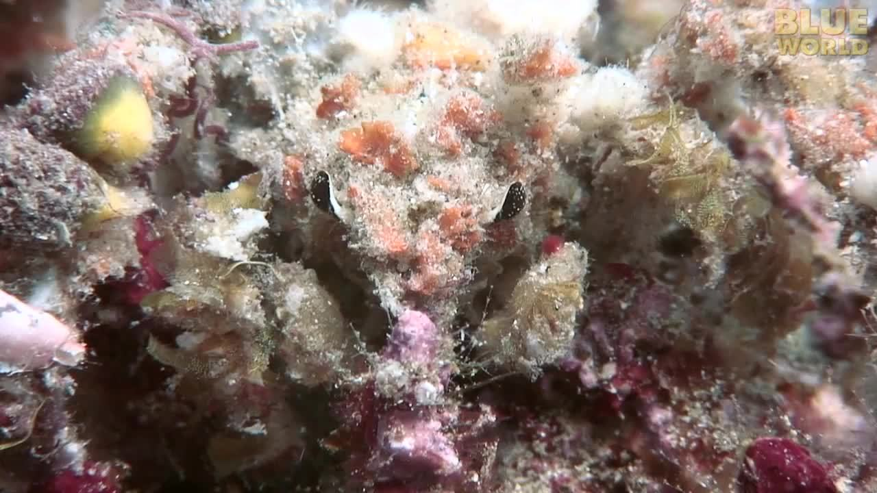 MarineBiologyGifs, awwducational, marinebiologygifs, Decorator crabs select pieces of seaweed and small animals from their habitat and fasten them to bristles on the back of their shell. During the molting process, they remove the decorations from their old shell and add them to the new one. (reddit) GIFs