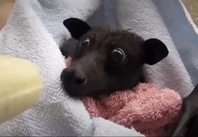 Watch and share Bat Enjoying Some Fresh Fruit GIFs by The Future Wizard on Gfycat