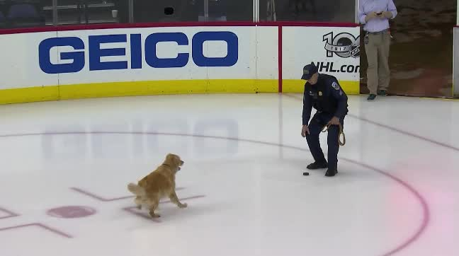 hawwkey, doggo getting puck GIFs