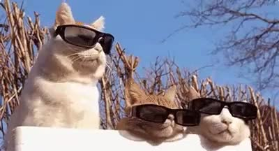 cat, cool, deal, deal with it, funny, it, life, pet, sunglasses, thug, with, Deal with it Cats GIFs
