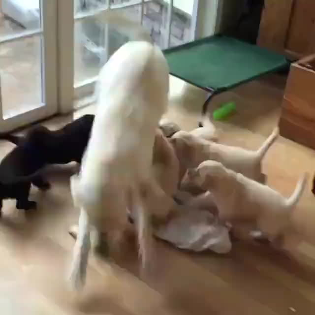 aww, dogs, puppies! GIFs
