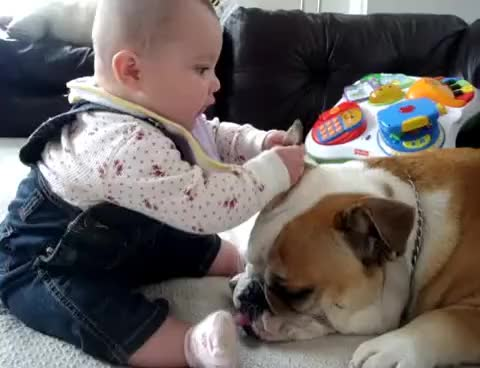 Watch BABY BITES GIF on Gfycat. Discover more BABY, BULLDOG GIFs on Gfycat