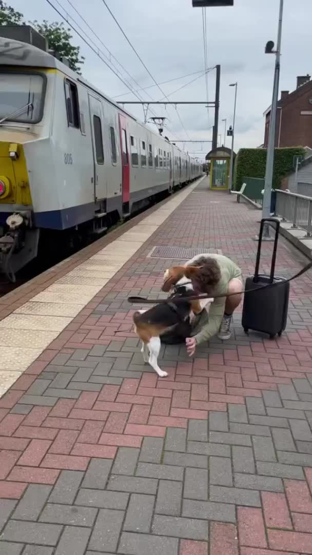 Watch and share Sweet-beagle-welcomes-home-owner-in-heartwarming-reunion-scloudtomp3downloader.com GIFs by Thund3rbolt on Gfycat