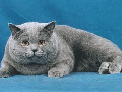 Watch and share Gif-gato GIFs on Gfycat