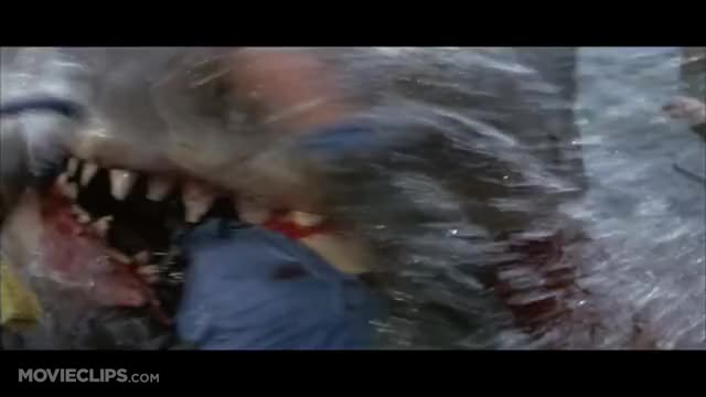 August Ames Death Reaction >> Quint Is Devoured - Jaws (9/10) Movie CLIP (1975) HD GIF by stu_fx - Find & Share on Zumto