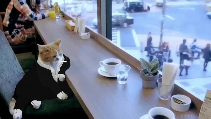 reallifedoodles, Business Cat GIFs