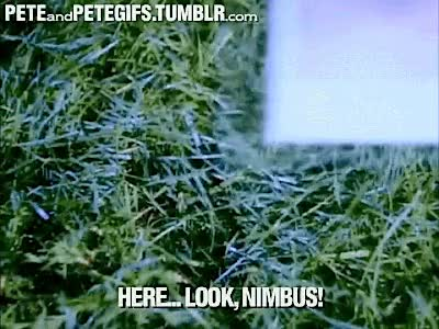 Watch Nimbus GIF on Gfycat. Discover more related GIFs on Gfycat