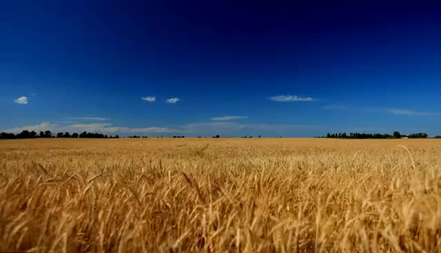 Watch and share 60minutes2relax - Golden Wheat Field GIFs on Gfycat