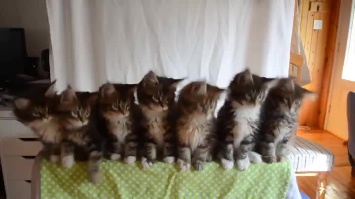 aww, cats, kittengifs, kittens, Synchronized kittens GIFs