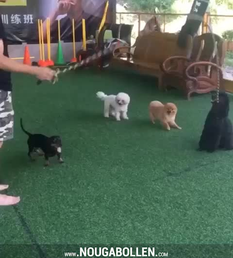 Watch and share These Dogs Love Jumping Rope GIFs by TMS on Gfycat