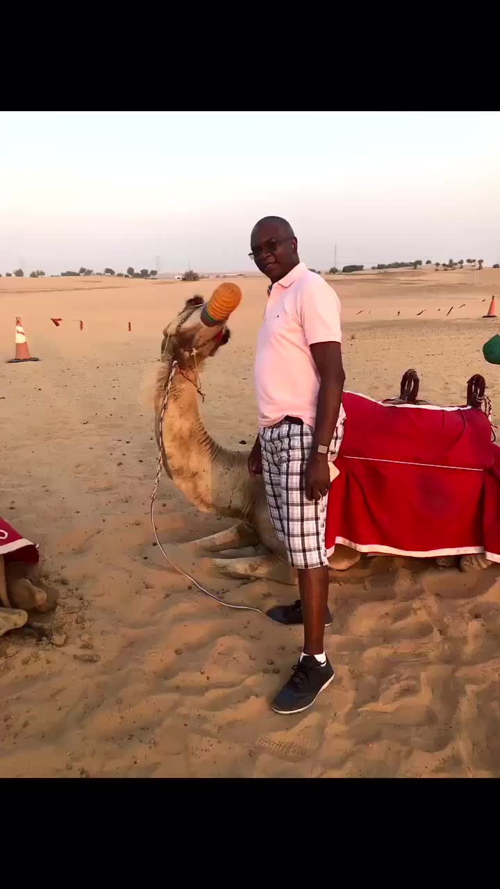 just a picture with the camel GIFs