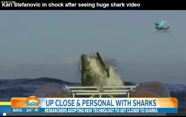 Watch and share 호주에서 발견된 상어중 12m급이라는 상어 GIFs on Gfycat
