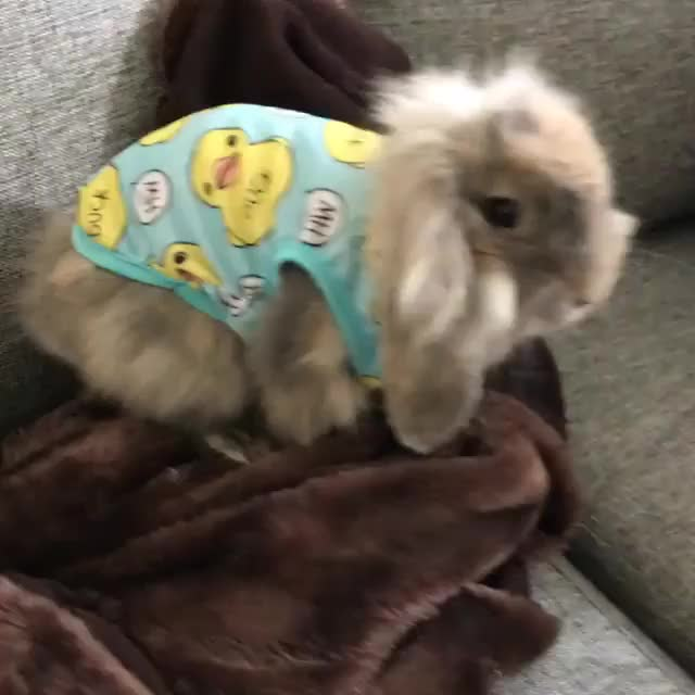Watch and share Bunnyshirt GIFs and Sweden GIFs on Gfycat