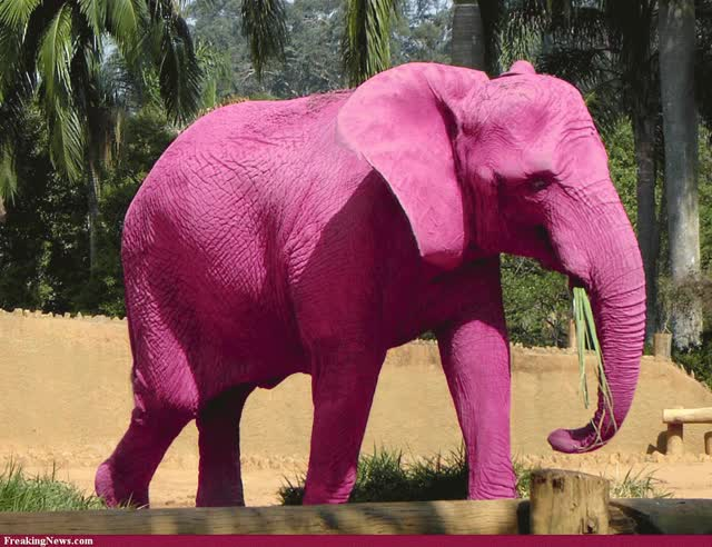 Watch Elephant GIF on Gfycat. Discover more related GIFs on Gfycat