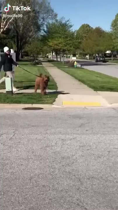 Watch and share The Way She Crosses The Street.. Every Time. GIFs by funnyvidspage on Gfycat