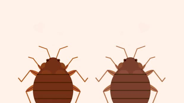 Watch and share 7 Infested Facts About Bed Bugs GIFs on Gfycat
