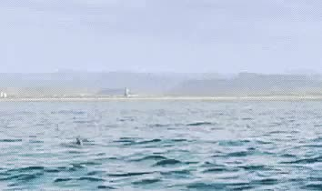 Watch and share Whale Hello There GIFs on Gfycat